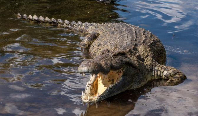 Tödliche Krokodil-Attacke in Indonesien