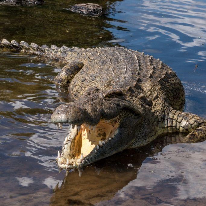 Junge (8) beim Baden von Krokodil gefressen (Foto)