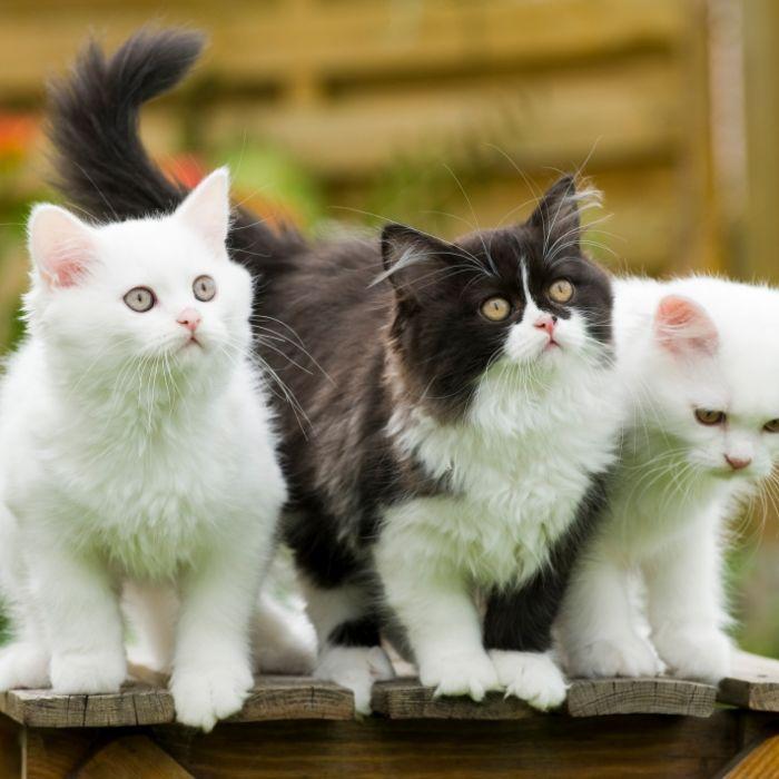 Horror-Fund! Fast 200 tote Katzen in Gartenlaube entdeckt (Foto)