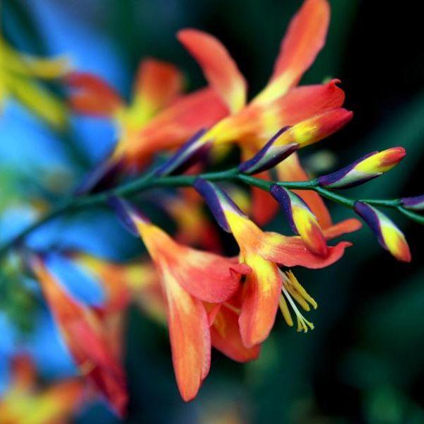 Achtung! DIESE Blumenzwiebeln müssen noch warten (Foto)