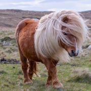 Sex mit Pony! Pferdeliebhaber filmte Tier-Vergewaltigung (Foto)