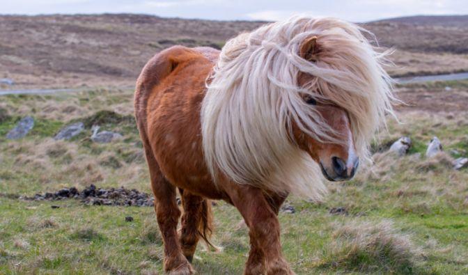 Sodomie mit Pferden in England