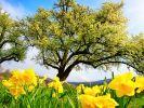 Wie wird das Wetter im April und Mai 2021? (Foto)