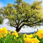 Frühlingshitze an Ostern? DAS berechneten die Wettermodell (Foto)