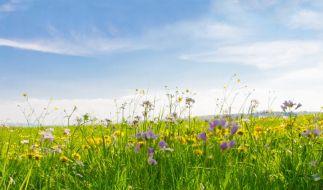 Der Frühling meldet sich Ende März endlich zurück. (Foto)