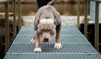 Ein Junge starb bei einer Hunde-Attacke in New Jersey. (Foto)