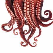 TikTok-Star posiert mit tödlichem Oktopus - Nutzer sind geschockt (Foto)