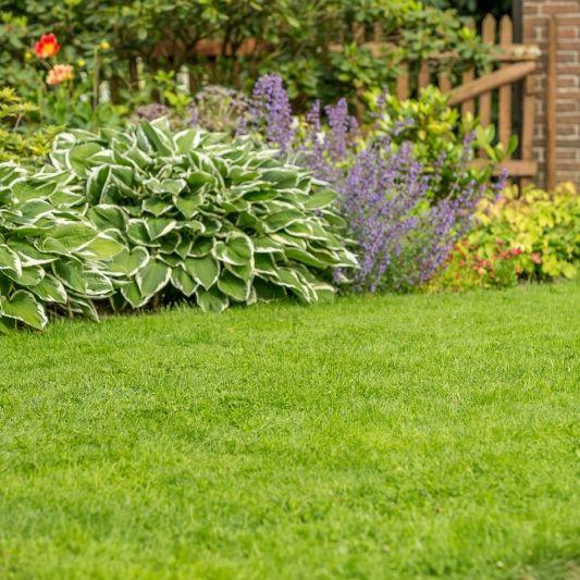Diese Profitipps machen Ihren Rasen frühlingsfit (Foto)