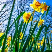 Temperatursturz an Ostern! Sorgt Hoch Odette für Wintereinbruch? (Foto)