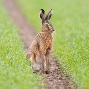 9 bizarre Fakten rund um den Osterhasen (Foto)