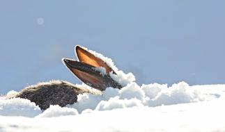 Meteorologen warnen vor Wintereinbruch nach Ostern. (Foto)