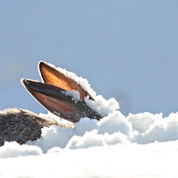 Winter-Schock nach Ostern! HIER drohen 20 Zentimeter Neuschnee (Foto)