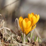 3 Gründe, warum der Frühlingwirklich tödlich sein kann (Foto)