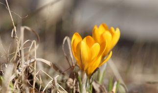 Der Frühling ist so schön und doch so tödlich. (Foto)