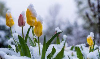 Frühling trifft auf Winter! Das April-Wetter hat Deutschland fest im Griff. (Foto)