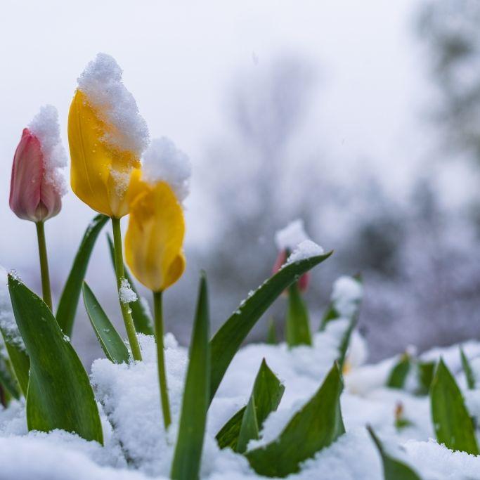 Grönland-Kälte bringt den Winter zurück! HIER droht jetzt Schneesturm (Foto)