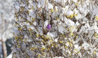 Mindestens bis zum Wochenende bleibt es in einigen Regionen Deutschlands winterlich. (Foto)