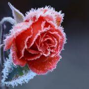 Winter im Frühling! Frostiger April könnte Kälterekord knacken (Foto)