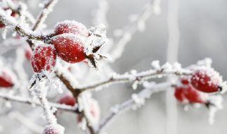 Eine neue Kaltfront lässt die Temperatur in Deutschland bald wieder purzeln. (Foto)
