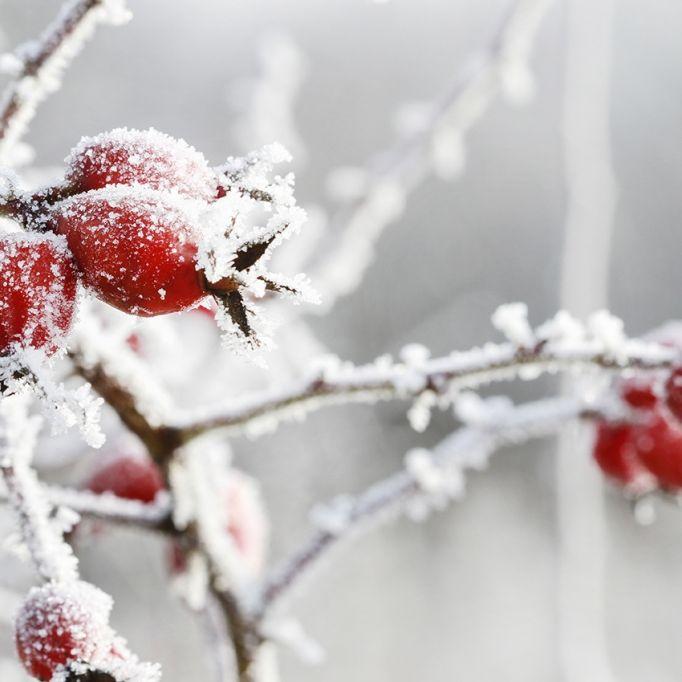 Kälte-Hammer ab Donnerstag! Meteorologen warnen vor Frost (Foto)