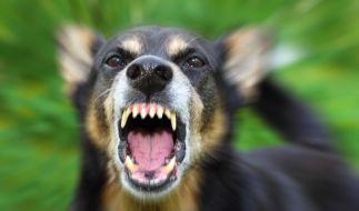 Ein Hund hat einen Dreijährigen auf einem Spielplatz attackiert. (Foto)