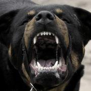 Gesicht abgerissen! Hunde reißen Junge (4) zu Tode (Foto)