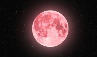Ein pinker Supermond leuchtete am Dienstag am April-Himmel. (Foto)