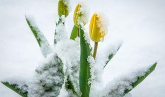 Der Mai startet offenbar sehr kalt. (Foto)