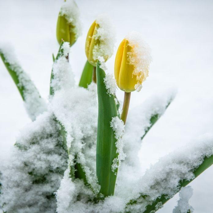 Schnee-Alarm zum Monatswechsel! Horror-Prognose für Wonnemonat (Foto)