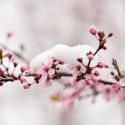 Erste Sommertage oder Eisheilige? Düstere Prognose im Wonnemonat (Foto)