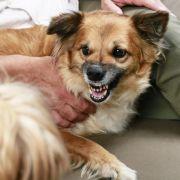 Ein Familienhund hat ein 4-jähriges Mädchen zu Tode gebissen.