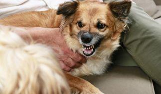 Ein Familienhund hat ein 4-jähriges Mädchen zu Tode gebissen. (Foto)