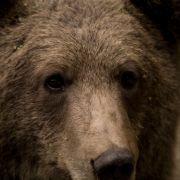 Jagdausflug in Rumänien! Royal soll Europas größten Bären getötet haben (Foto)