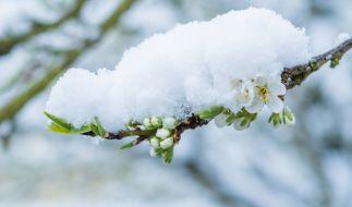 Temperatursturz sorgt pünktlich zu den Eisheiligen für trübe Stimmung. (Foto)