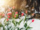 An Pfingsten bleibt das Wetter wechselhaft. Sogar Schnee ist möglich! (Foto)