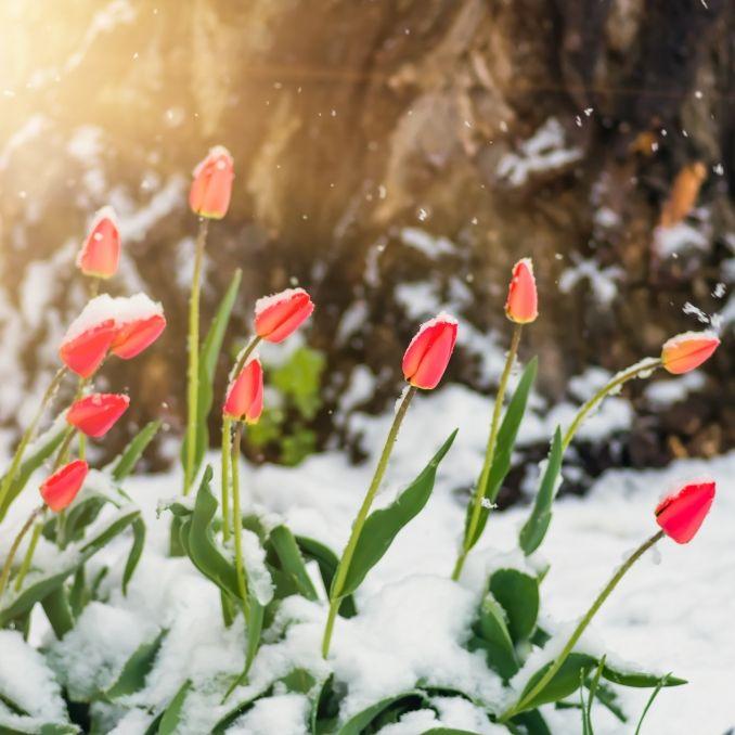 Schnee-Horror an Pfingsten! HIER soll es 50 Zentimeter Neuschnee geben (Foto)