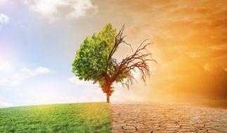 Wie können wir das 1,5-Grad-Klimaschutzziel erreichen? (Foto)