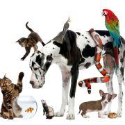 Wiederholung der Tierdoku online und im TV (Foto)
