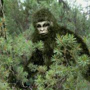 Kryptozoologe sicher: Mysteriöse Kreatur lebt in Wäldern Europas (Foto)