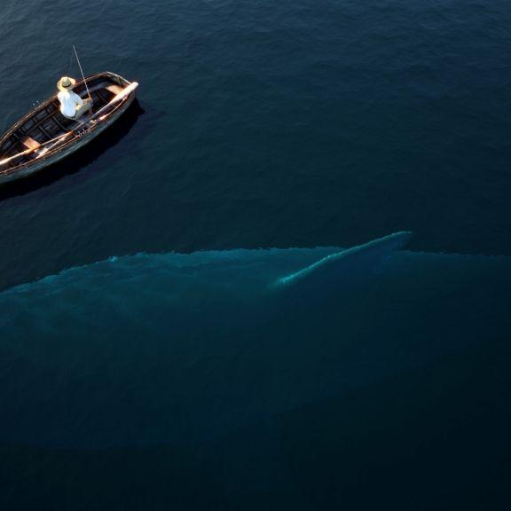 Video zeigt gigantischen Hai! Schwimmt da etwa ein Megalodon? (Foto)