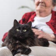 Einsamer Tod! Katzenhorde frisst Oma-Leiche auf (Foto)
