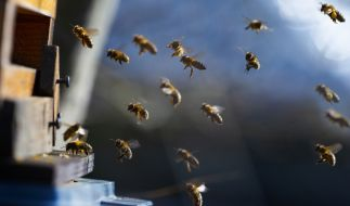 Bienen sollten als Bestrafung für einen Jungen herhalten. (Foto)