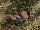 Von dem kleinen Samuel aus dem US-Bundesstaat Texas fehlte wochenlang jede Spur - jetzt wurde die Leiche des Fünfjährigen in einem Motelzimmer gefunden (Symbolbild). (Foto)