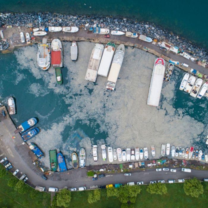 Artensterben durch Meeresrotz! Wissenschaftler schlagen Alarm (Foto)