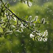 Achtung Allergiker! So hoch ist die Pollen-Belastung aktuell (Foto)