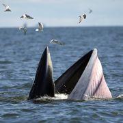 10-Meter-Wal kracht auf Fischerboot - 18-Jähriger im Koma (Foto)