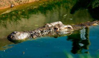 """Ein """"unsterbliches"""" Krokodil hat mehr als 80 Menschen gefressen. (Foto)"""
