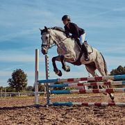 Jockey von Pferd zerquetscht! Pferderennstar (22) im Krankenhaus (Foto)