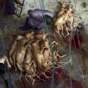 Trotz Corona! Mehr als 5000 Hunde bei widerlichem Schlachtfest getötet (Foto)