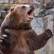 Bär zerfleischt 16-Jährigen in Nationalpark - Junge tot! (Foto)